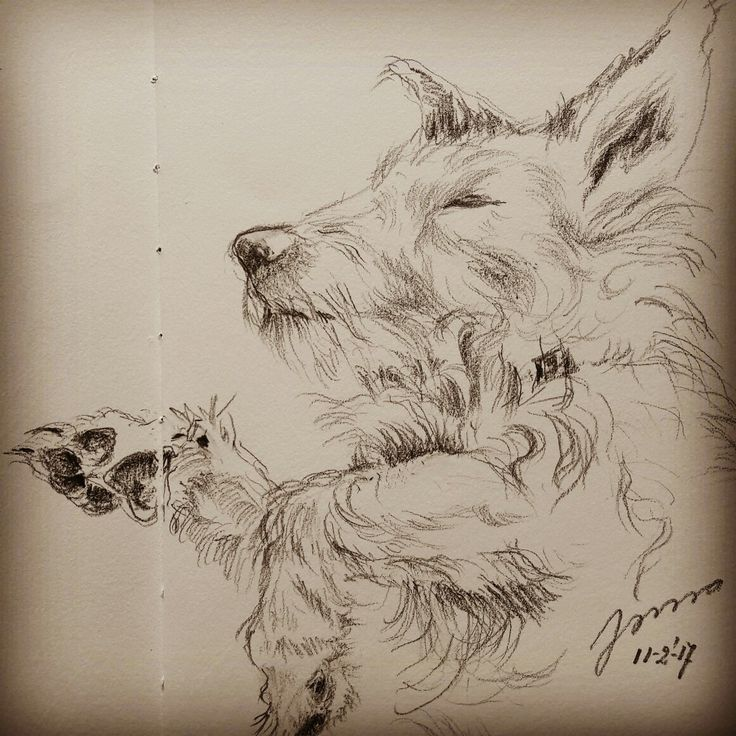 Pencildrawing of cutest dog ever ! By Jonna Sips