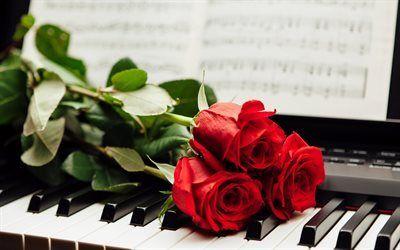 Scarica sfondi piano, tasti di un pianoforte, fiori, rose rosse