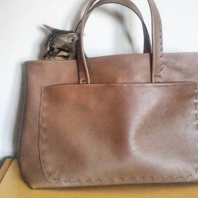 Trova l' intruso#handmade#madeinitaly#crepapelle#fw16#verapelle#card#gatti