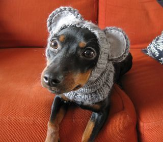 Every dog needs a humiliating hat, and this one surely is easy to make. The tube is knitted in round and the ears are crocheted.