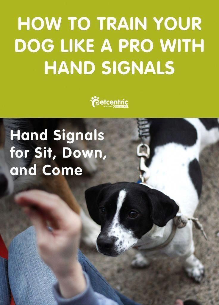Different Terminated Command For Dog Training You Can Find Out
