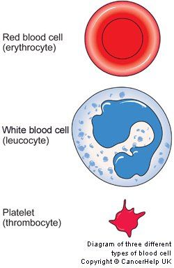 Frontiers | Platelets and Infections – Complex ... |Platelets Diagram Gcse