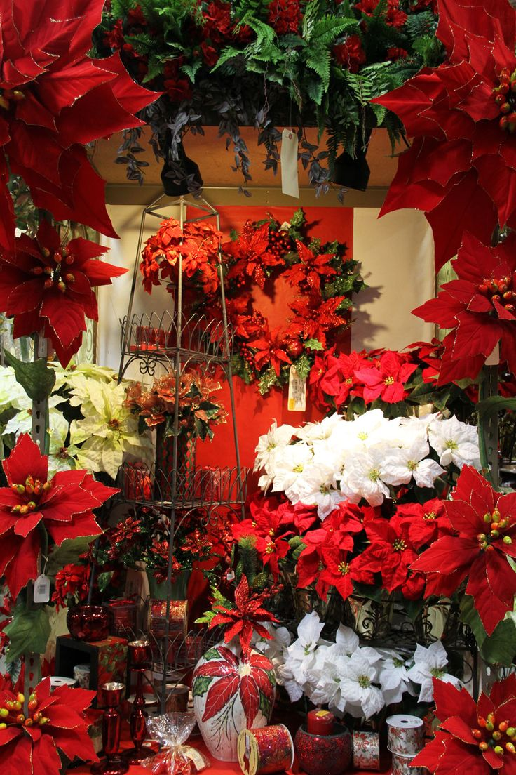 Christmas Decorations At Haskins : Holiday poinsettia display wholesale locations in