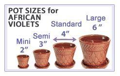Pot Sizes for African Violets
