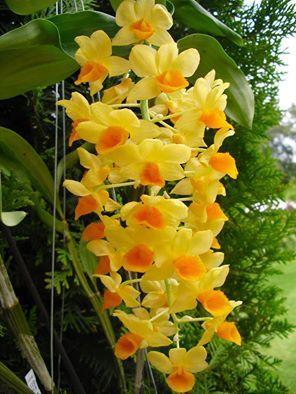 Orquideas  #flores #orquideas