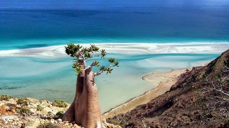 Блог Светланы Хливицкой: Божественный остров Сокотра , Йемен