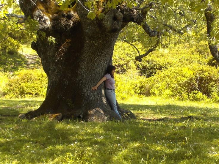 Realmente te sientes pequeña junto a su impresionante tronco. Es el Roble del Acarreadero.
