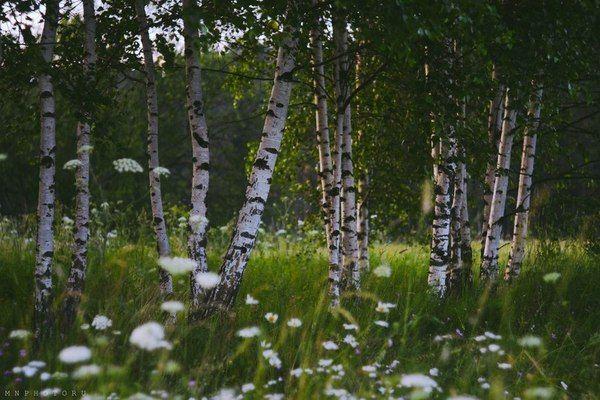 Владимирская область Фото, Природа, владимирская область, длиннопост