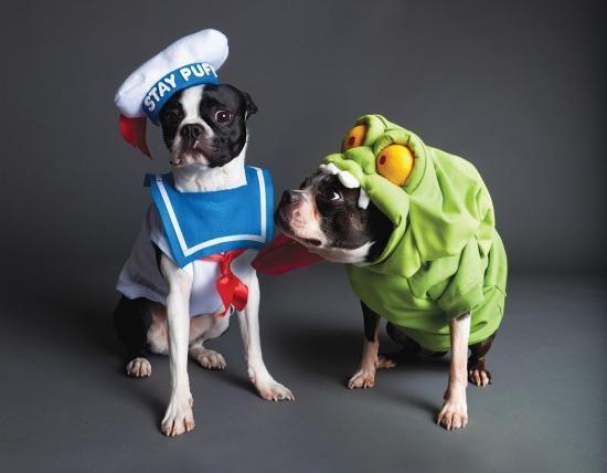 Lustige Hunde in schrägen Kostümen #5