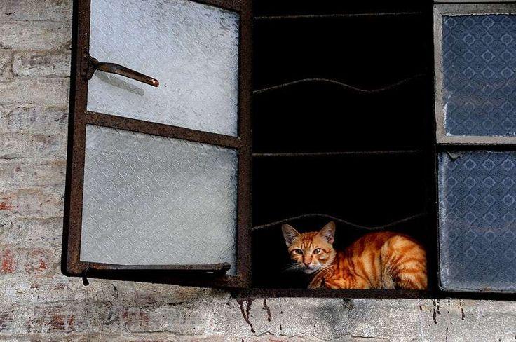 sul-davanzale-della-finestra.jpg (880×584)
