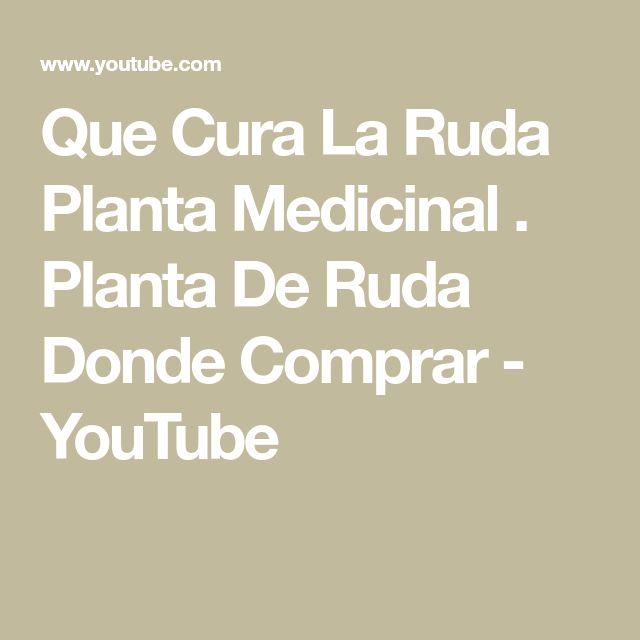Que Cura La Ruda Planta Medicinal . Planta De Ruda Donde Comprar - YouTube