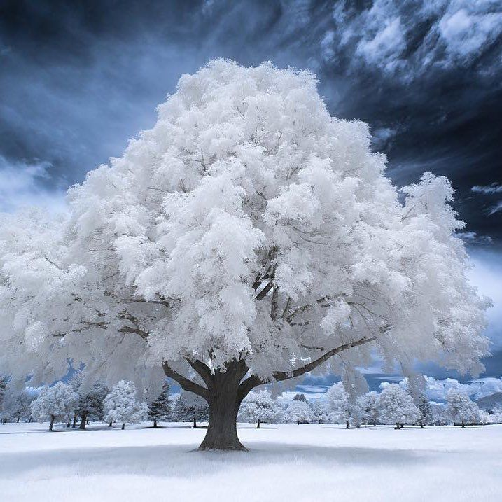 The Beauty Of Nature Salt Lake City Utah Photo By Samuel Lethier Winter Scenery Winter Pictures Winter Landscape