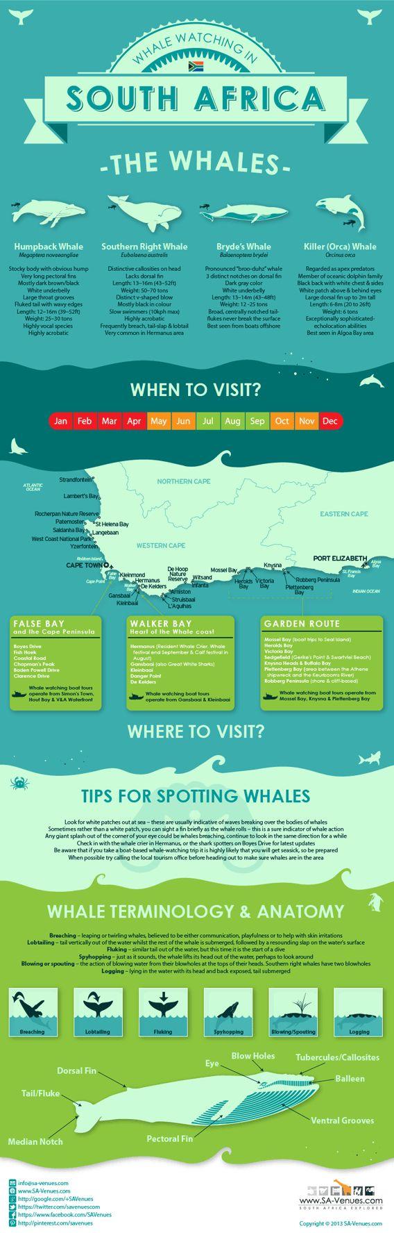 Als je in de zomervakantie naar Zuid-Afrika reist, heb je de meeste kans om walvissen te kunnen zien. South Africa Whale Watching Infographic