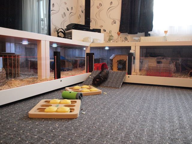 "Love this! Looks nicely ventilated and you can see the piggies, unlike some ""under the shelf/table"" designs."