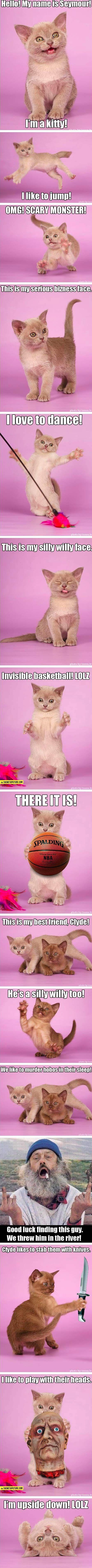 Best 25 Kitten names for boys ideas on Pinterest