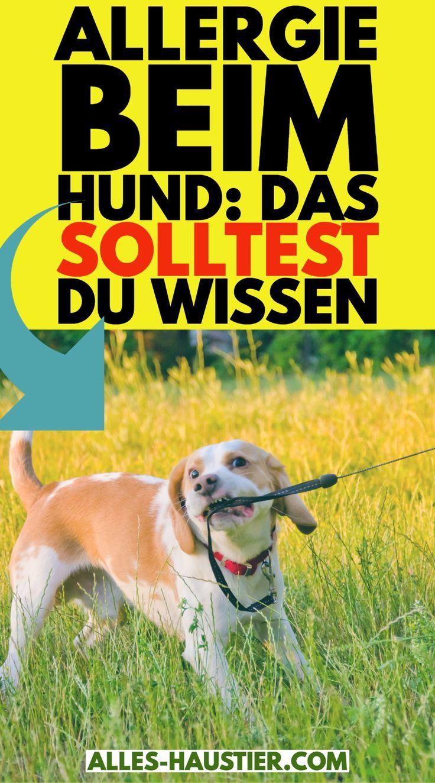 Pin Auf Allergien Beim Hund