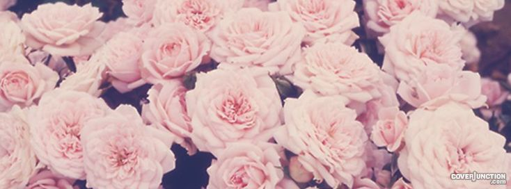 pink roses Facebook Cover