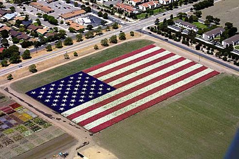 As a patriotic gesture after the tragedy of September 11, 2001,  Bodger Seeds planted a Floral Flag in Lompoc, California.The 6.5-acre flag measures 740 by 390 feet. More than 400,000 Larkspurs were planted in January which have now bloomed into more than two million red, white and blue flowers.