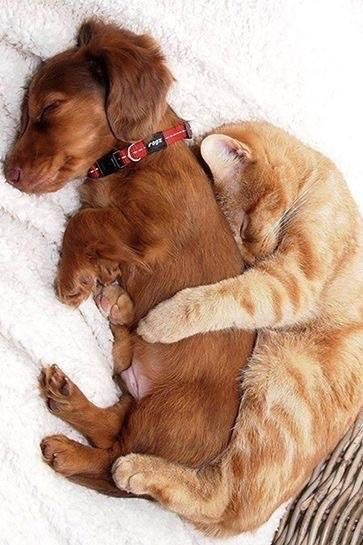 Ungewöhnliche Tierfreundschaften.........Katze und Hund