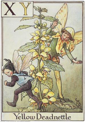 Keltapeippi (Lamium galeobdolon), from Flower Fairies of the Alphabet.