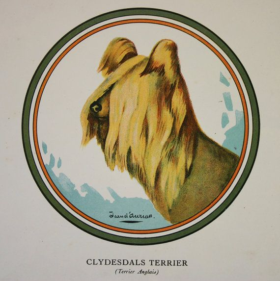 Clydesdale or Paisley Terrier Print Vintage by TheTerriersClub