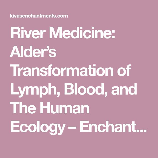 River Medicine: Alder's Transformation of Lymph, Blood, and The Human Ecology – Enchantments