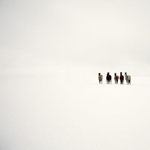 Snowblind by Jo Bradford on Flickr.