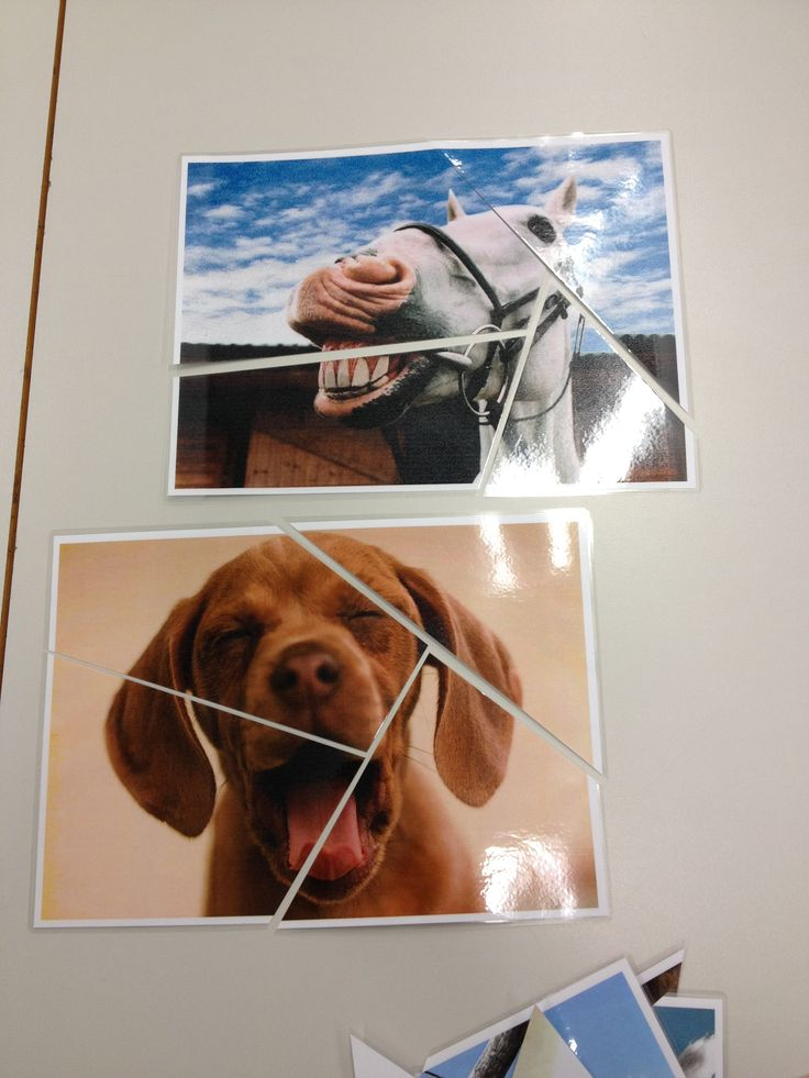 Grouping techniques: stolen from TfEL. Cute/ Funny animal pictures. Give students random cards and have them find their group. When playing games the animal on the group card (dog, horse) become the group name which saves that coming up with a name argument! #groupingtechniques #TfEL