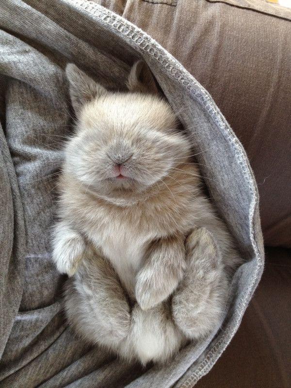 sleeping baby bunny, too cute.