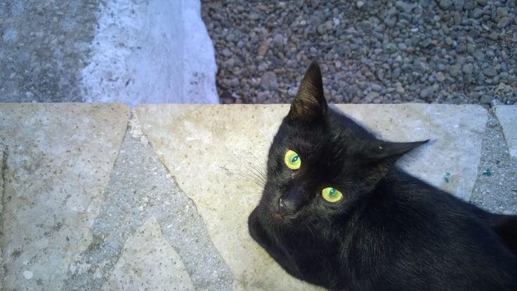 cat, Assos, Kefalonia