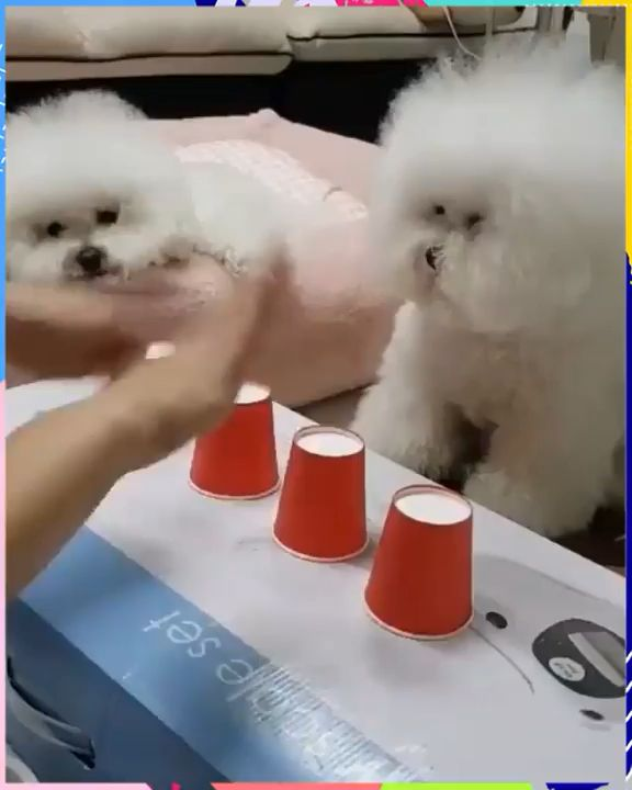 Cute & Clever Dog 😍  – Video:    T I E R E