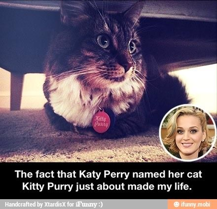 The fact that Katy Perry named her cat Kitty Purry just about made my life.