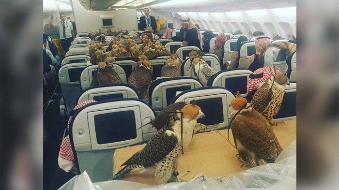 OMG! Kursi-kursi Pesawat Ini Dipenuhi Burung Elang, yang Beli Tiket Sultan?