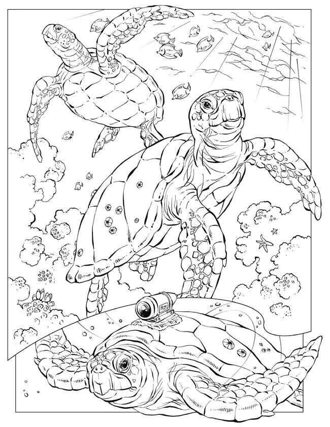 Coloring Book Animals J To Z Ausmalbilder Schildkrote Kostenlose Ausmalbilder Malbuch Vorlagen