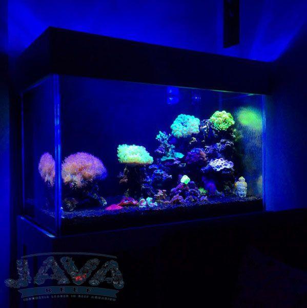coral grade a untuk aquarium air laut