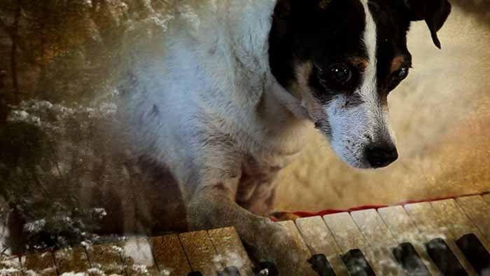 Il cinema può, è, deve essere tantissime cose diverse. Laurie Anderson ha deciso di metterle insieme. L'artista multimediale è l'autrice di Heart of a Dog , film in cui racconta in prima persona il suo rapporto con la morte: partendo dalla madre, arrivando...