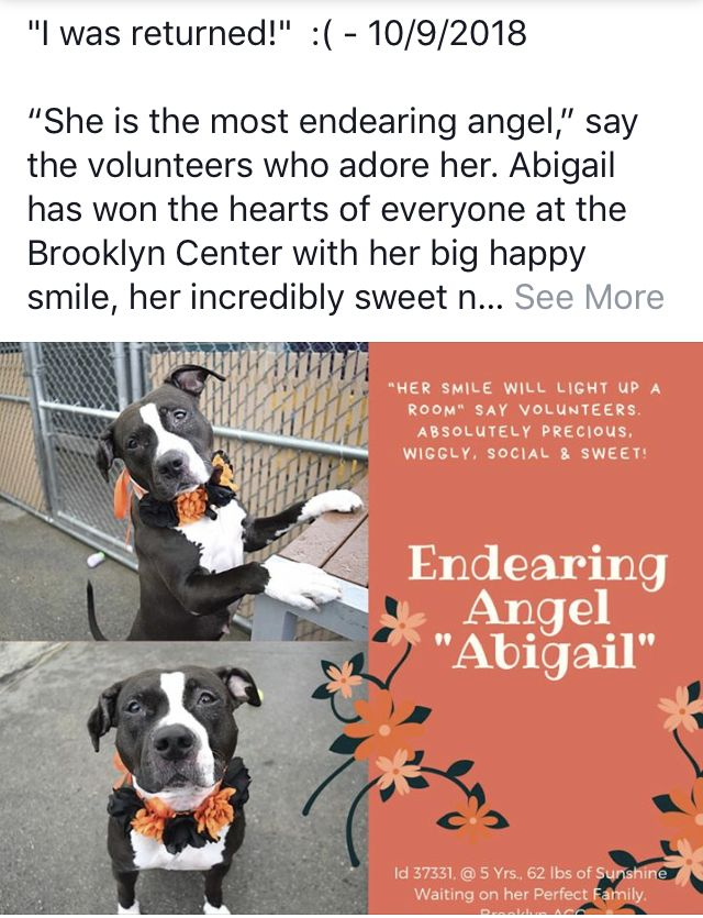 Abigail Returned Needs Help Nyc Dogs Staten Island New York Dog Safe