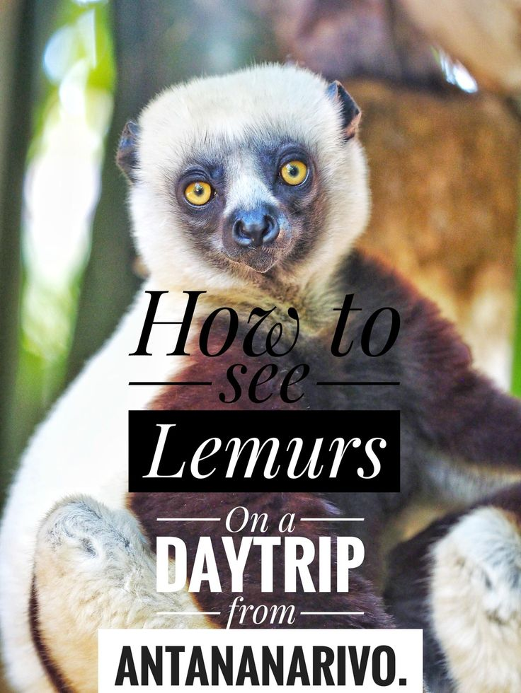 Madagascar got some of the most amazing wildlife in the whole of Africa. Here´s the perfect how to see Lemurs