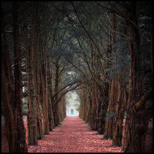 Another tree tunnel: Yew Trees, Perthshire, Scotland