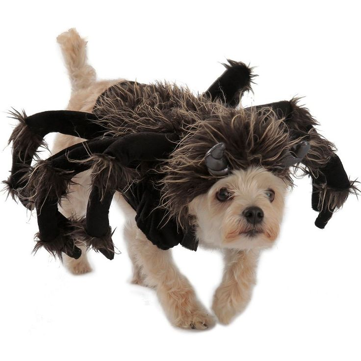 Pet Tarantula Costume, Black