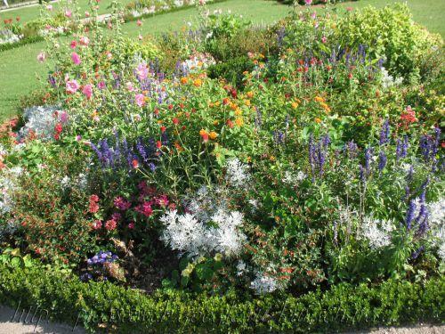 french gardens plants | Циния персидский ковер фото u2014 Циния ...