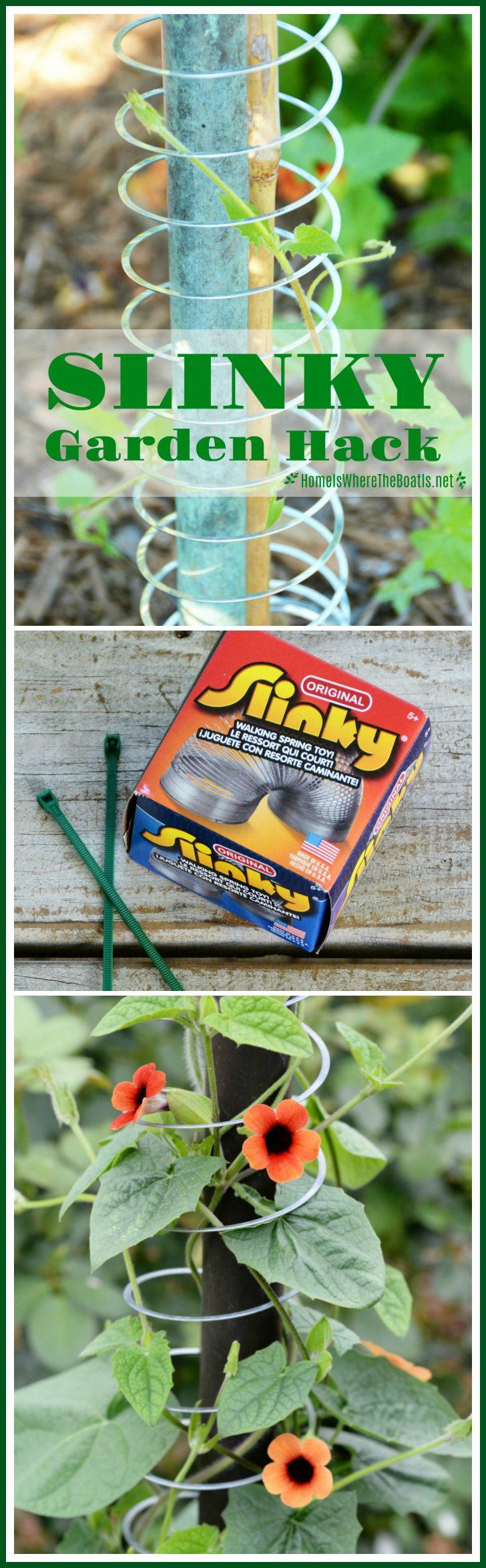 Slinky Hack and Trellis for a Favorite Flowering Vine ,  Jenna Sivells