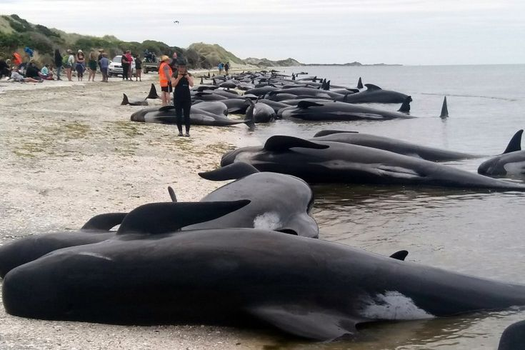 Comment diminuer le bruit au fond des océans pour sauver les animaux marins ? La pollution sonore des océans est dangereuse pour la faune marine. Il est possible de la réguler.