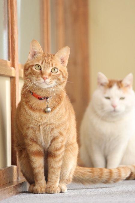 cybergata: http://cybergata.tumblr.com/ Ginger Cat and Shironeko.