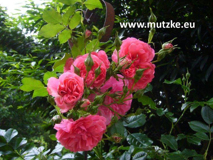 Lila Blumen Bestimmen. 25+ einzigartige blumen bestimmen ideen auf ...