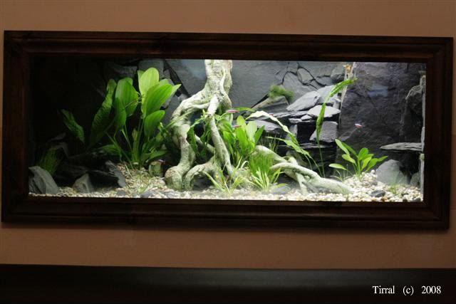 17 Best Images About M I S C Aquarium On Pinterest