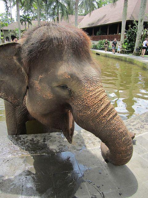 Riding elephants in Phuket, Thailand - item checked off my bucket list.