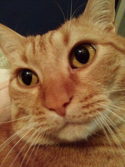 Retro  Koty i Pies: Kot najlepszą nianią dla dziecka