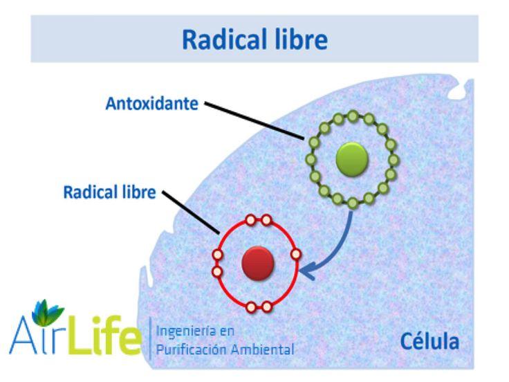 https://flic.kr/p/rLjAUn   a3   PURIFICACIÓN DE AIRE AIRLIFE te dice. ¿qué son  los radicales libres?  En nuestro cuerpo Los radicales libres son átomos o moléculas inestables a los que les falta un electrón. Estos radicales recorren nuestro cuerpo intentando robar, de moléculas estables, el electrón que les falta. Cuando por fin lo consiguen, convierten a éstas en radicales libres, por lo que, intentan recuperar el electrón que les falta de otras moléculas de su alrededor. De esta forma se…