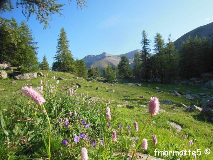 Mont Pelat 3050 mètres randonnée dans le Mercantour